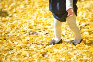 秋出張撮影
