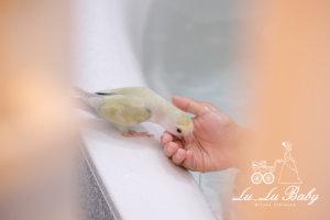 ことりのゆとりお風呂